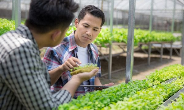 Farmer Team Working In Hydrophonic Farm